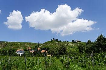 Weinberg in Radebeul